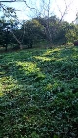 20140913栗畑の草刈り後7