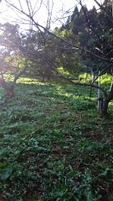 20140913栗畑の草刈り後8