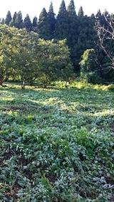 20140913栗畑の草刈り後
