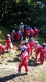 20141008幼稚園の栗拾い6