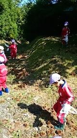 20141008幼稚園の栗拾い7