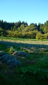 20141009ラベンダーの畑
