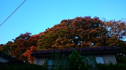 20141009千秋公園の紅葉4