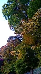 20141009千秋公園の紅葉6