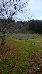 20141202ラベンダーの畑1
