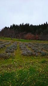 20141202ラベンダーの畑2