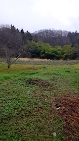 20141202ラベンダーの畑3