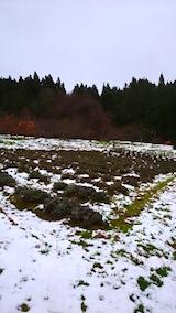 20141204ラベンダーの畑