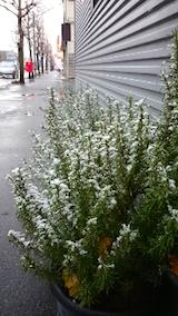 20141205外の様子雪降りだす3