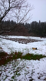 20141205ラベンダーの畑
