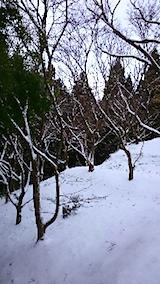 20141206栗畑の様子