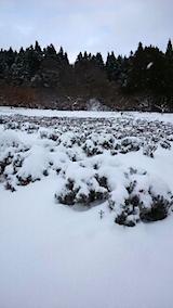 20141206ラベンダー畑2