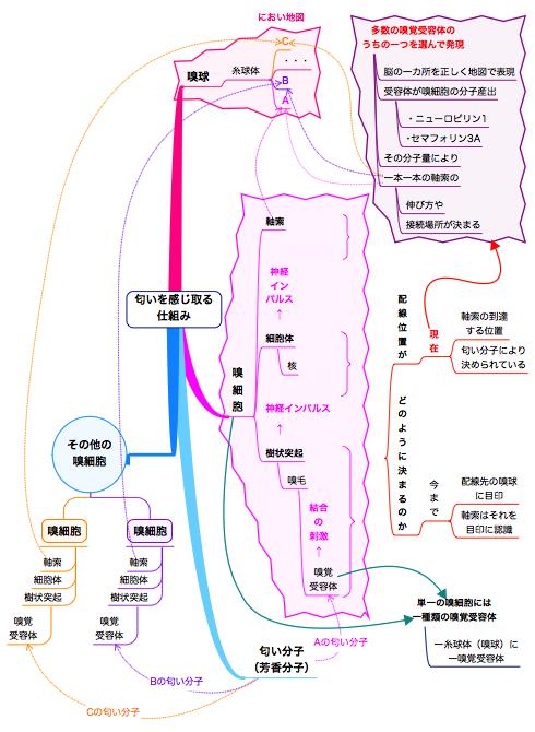 20141211におい分子とにおい地図