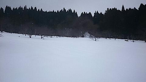 20150110ラベンダー畑の様子1