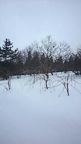 20150110八重紅枝垂れ桜のある斜面の様子