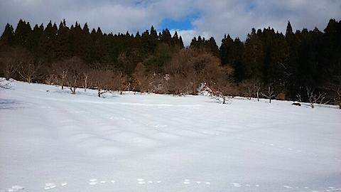 20150113ラベンダー畑の様子