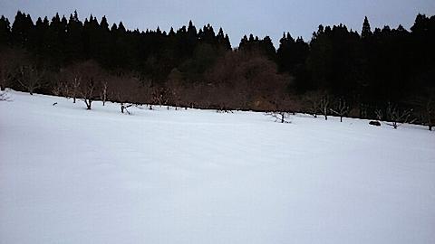 20150126ラベンダー畑の様子
