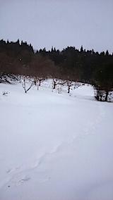 20150211八重紅枝垂れ桜のある斜面の様子