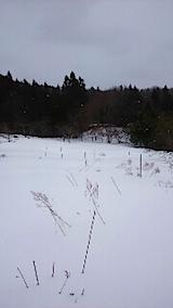 20150211ラベンダーの畑2