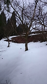20150212ラベンダーの畑へと向かう急な坂道の様子4