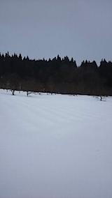 20150212ラベンダーの畑