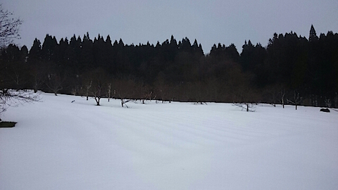 20150212ラベンダー畑の様子