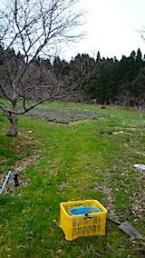 20150413ラベンダーの畑