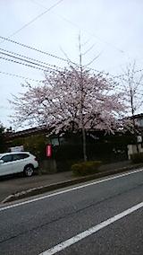 20150414桜