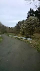20150414山へ向かう途中の様子峠道のこぶしの花