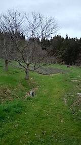 20150414ラベンダーの畑