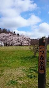 20150415一つ森公園の桜1