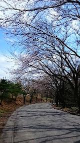20150415一つ森公園の桜2