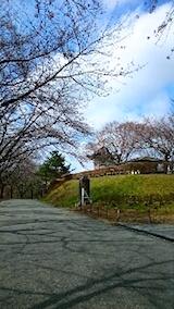 20150415一つ森公園の桜3