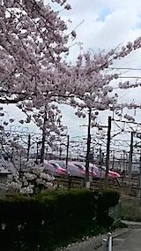 20150415操車場前の桜1