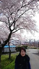 20150415操車場前の桜3