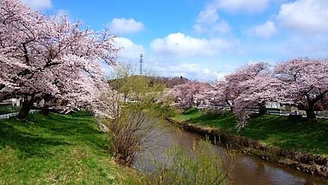 20150415太平川沿いの桜10