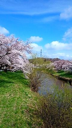 20150415太平川沿いの桜11