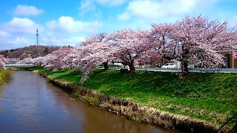 20150415太平川沿いの桜13