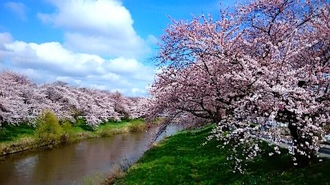 20150415太平川沿いの桜14