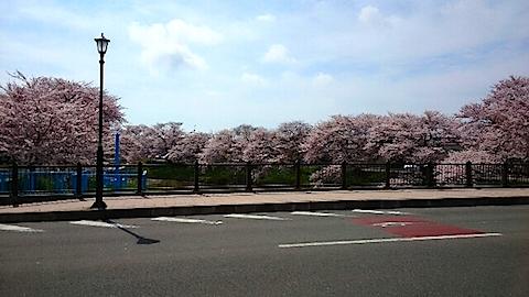 20150415太平川沿いの桜15