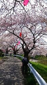 20150415太平川沿いの桜17