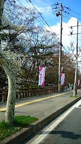 20150415千秋公園前2