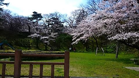 20150415千秋公園前の桜2