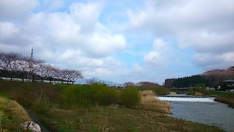 20150415旭川沿いの桜4