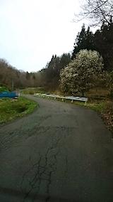20150415山へ向かう途中の様子峠道のこぶしの花