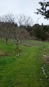 20150415ラベンダーの畑
