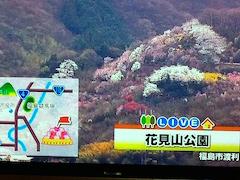 20150415福島市花見山公園1