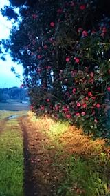 20150416山の様子ツバキの花