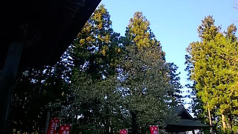 20150429虎の尾桜4