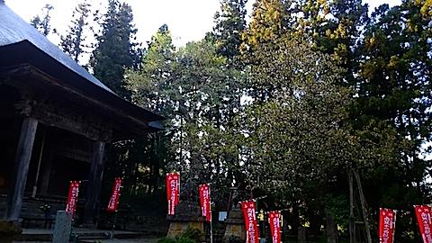 20150429虎の尾桜5